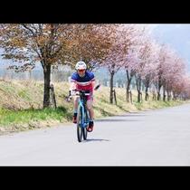 【桜】アルプスあづみのセンチュリーライド