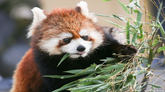 【旭山動物園入園券付】みんなで行こう動物園♪朝食ビュッフェ&スパ入り放題付