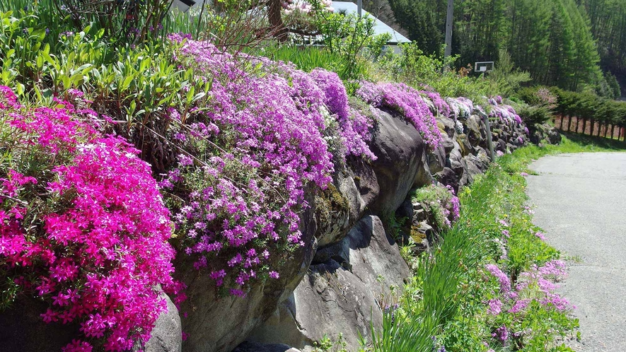 ・春の風景