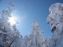 樹氷&太陽