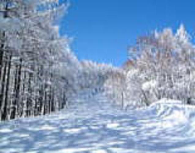 峰の原スキー場 初心者コース