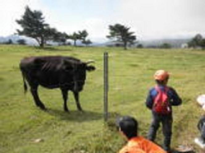 根子岳登山道途中では牛さんとお友達