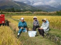 地元のお米を分けていただいています 無、又は低農薬の有機米です