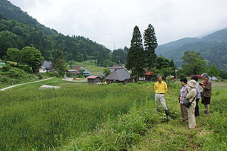 地元の小麦畑 無農薬で安心