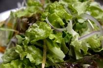 高原野菜のフレッシュサラダ
