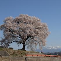 王仁塚(わにつか)の桜プラン用
