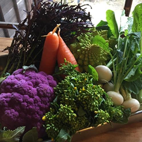 蓼科野菜1