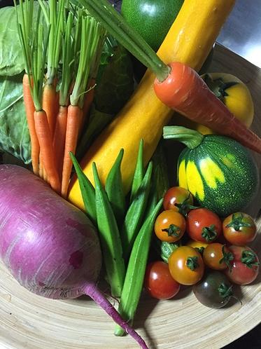蓼科野菜2