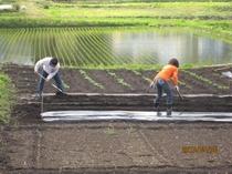 黒姫山を背景に農作業を体験