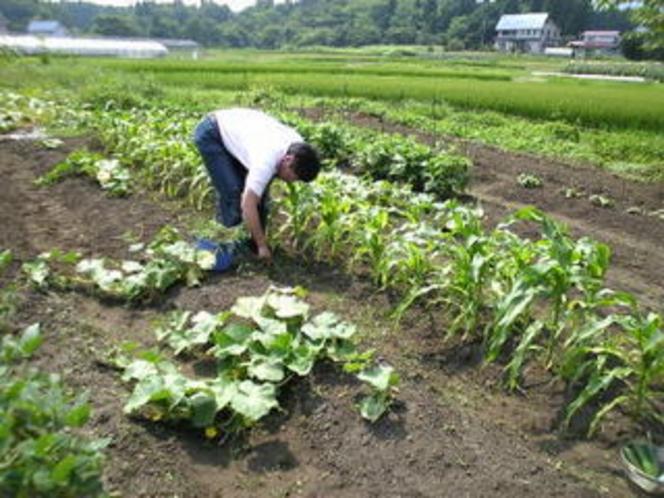アルマナック農園