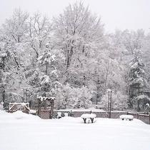 *[冬のドッグラン]雪遊びはもちろん敷地内で利用可能なスキーも貸出可能です
