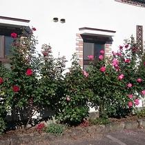 *[ガーデン]バラの季節にはほんのり甘い香りに包まれます