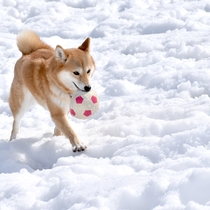 *ドッグランイメージ ワンちゃんと一緒に雪遊び♪