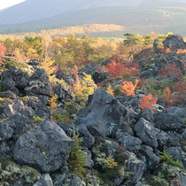 *[鬼押出し園]当館より車で約10分!浅間山の麓に広がる「溶岩の芸術」