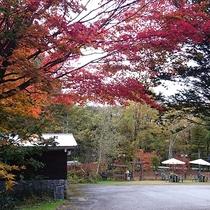 *[ガーデン]紅葉は10月中旬頃から始まり下旬頃までとなります