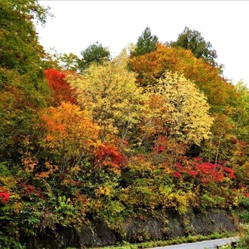 *秋には山々の紅葉をお楽しみ頂けます。