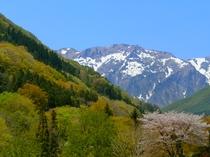 桜と谷川岳