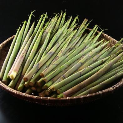 ☆苗場山産天然竹の子を楽しもう☆【期間限定】初夏の味覚「たけのこ」料理を召し上がれ♪【1泊2食付】