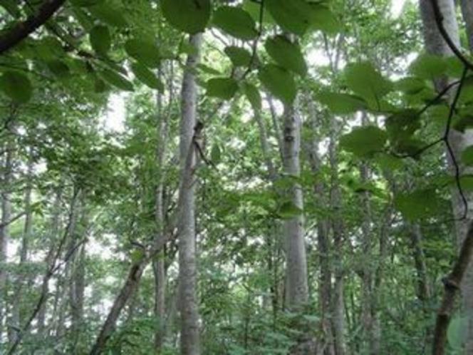 岩岳 ねずこの森