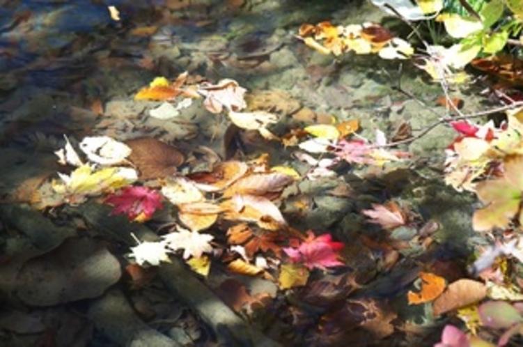晩秋の鎌池 水面