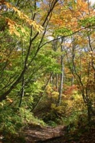秋自然園木立