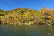 晩秋の鎌池 全体