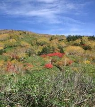 自然園木々紅葉