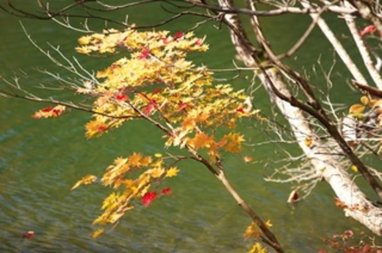晩秋の鎌池 木々