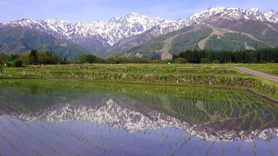 *[白馬の景色・春]新緑の季節ならではの瑞々しい風景が待っています