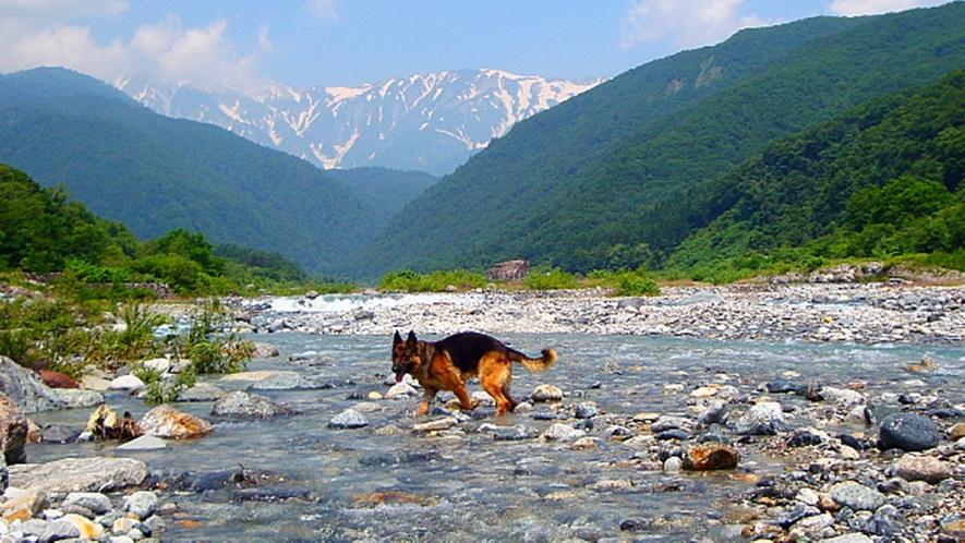 *[白馬の景色・夏]清らかな水の流れにワンちゃんも大喜び
