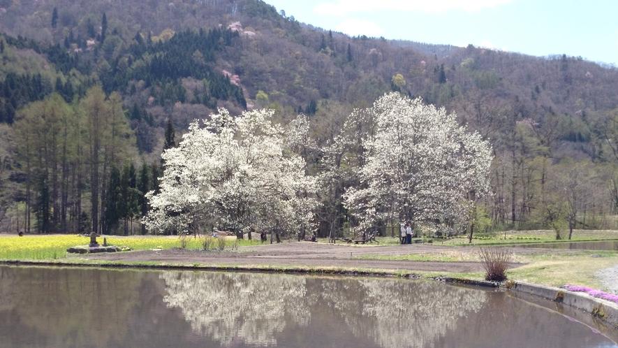 *[白馬の景色・春]早春ならではの瑞々しい風景が待っています