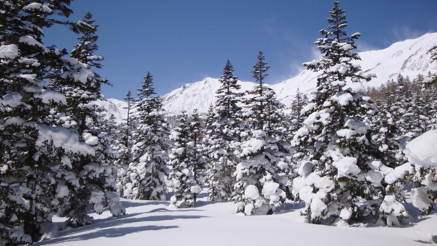 *[白馬の景色・冬]国内でも有数のスノーリゾート白馬