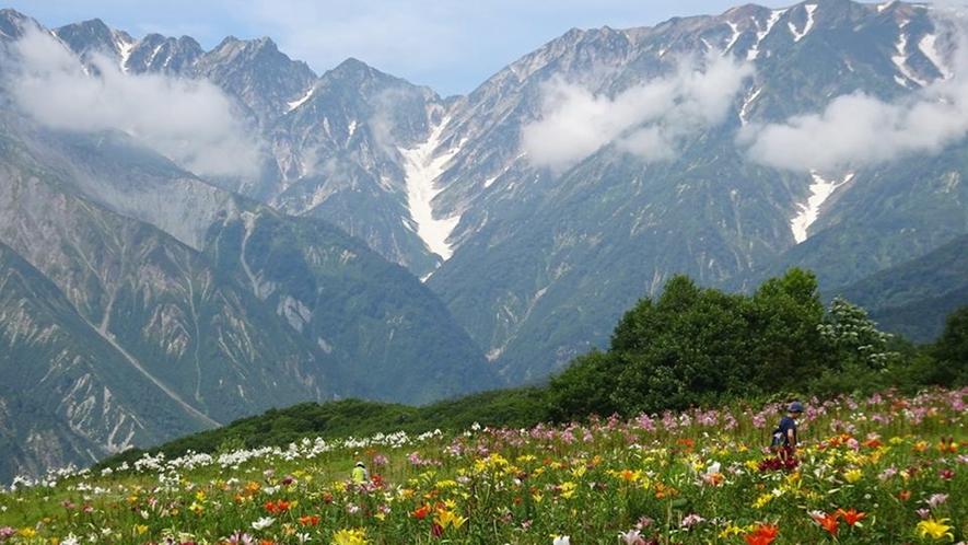 *[白馬の景色・夏]低いところが不帰のキレットと不帰沢。左に不帰の嶮Ⅰ峰、Ⅱ峰、Ⅲ峰と続く