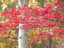 紅葉が美しい高原の秋