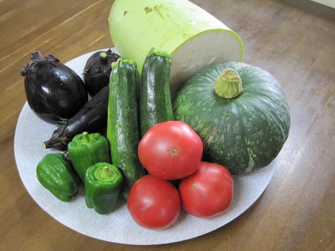 収穫した自家野菜