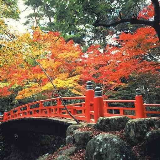 宮島の秋(紅葉谷)