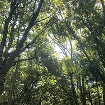 原生林の面影を残す元宇品公園まで徒歩圏内。自然を感じながらお散歩♪