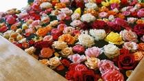 約400輪もの美しい花々に包まれる 「バラ風呂」
