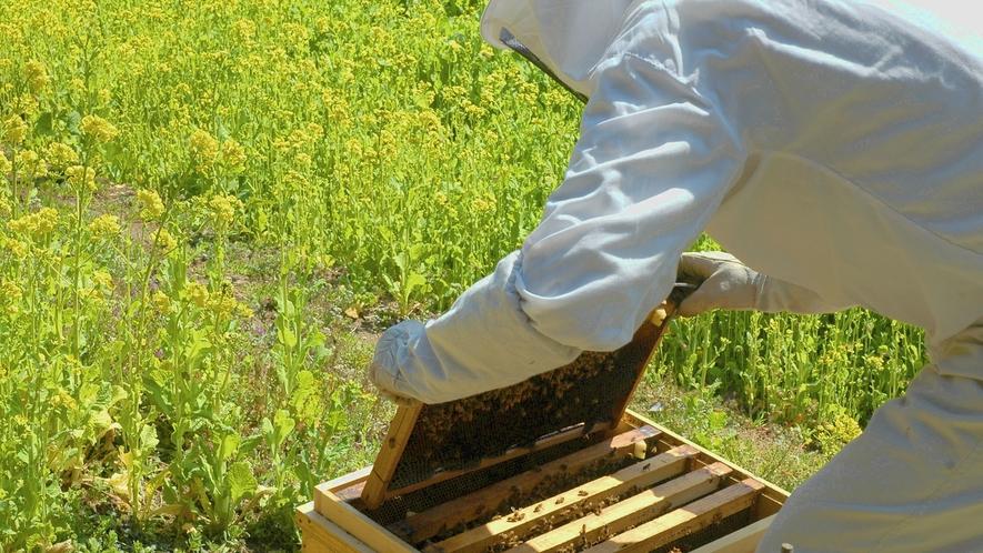 ・くろしおファームでの養蜂の様子