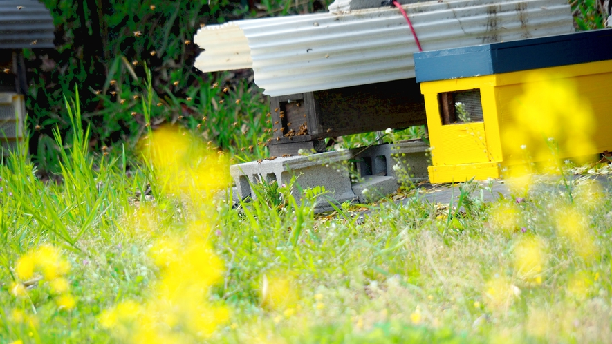 ・くろしおファームのハチさん
