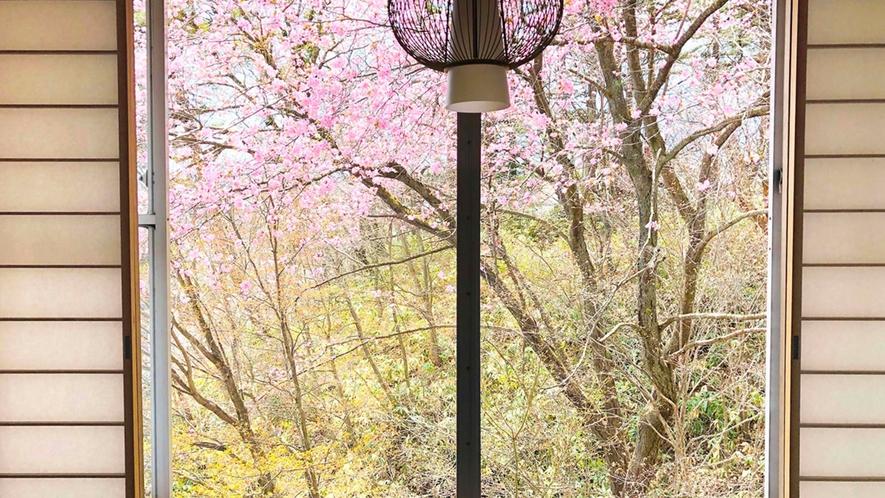 ・和室8畳 お部屋から眺める桜がとても綺麗です