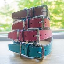4匹は色違いの首輪をしています。ブラウン→トキト、レッド→ステラ、ピンク→クイーン、ブルー→コスモ。