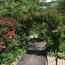 エントランスのアーチ、6月には薔薇が満開!皆さまをお出迎えいたします