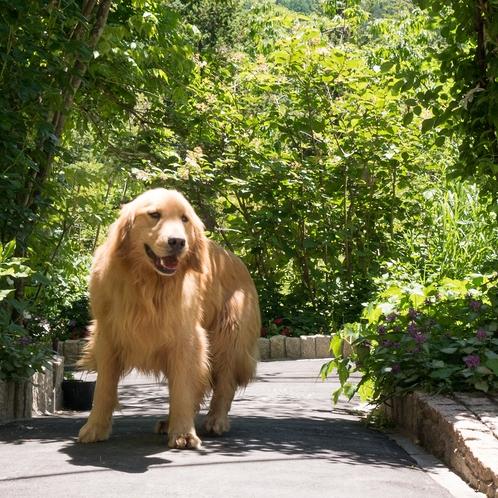 「トキト」男の子です。一緒にお散歩しませんか?