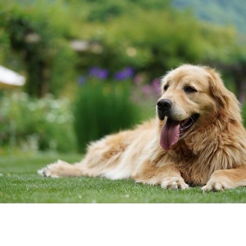 芝生で一休みステラ