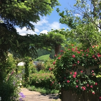 ガーデンの看板が埋め尽くされるほどの薔薇です!