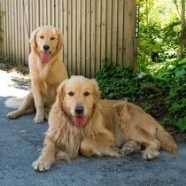 看板犬のうちの2匹「ステラ」と「コスモ」。母娘です♪