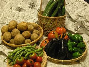 女将手作り 有機野菜