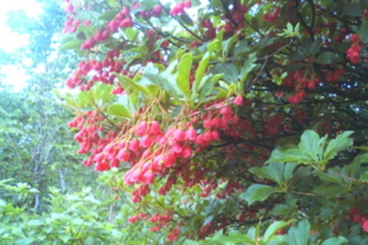 高山植物2-4x6