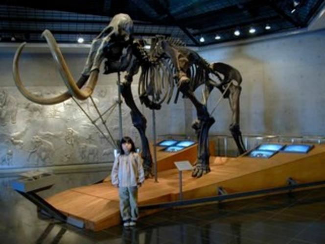 岩櫃 恐竜